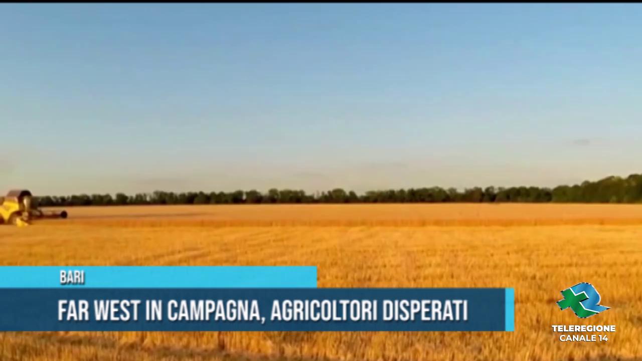 agricoltori disperati