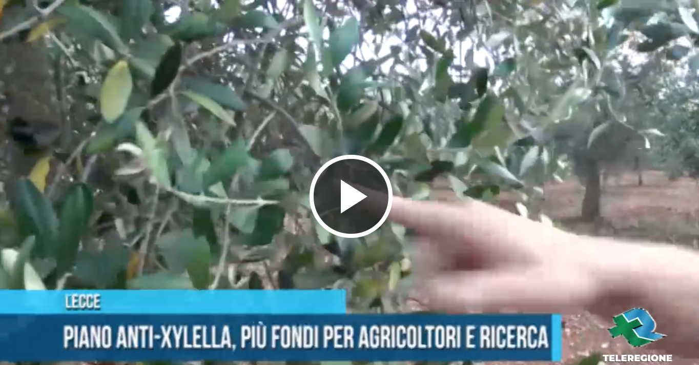 indennizzi olivicola